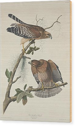 Red Shouldered Hawk Wood Print by John James Audubon
