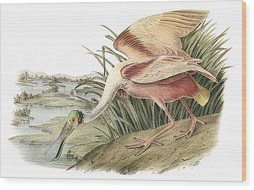 Roseate Spoonbill Wood Print by John James Audubon