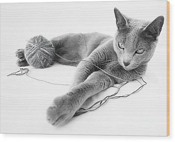 Russian Blue Wood Print by Nailia Schwarz