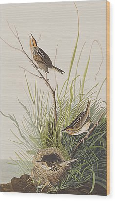 Sharp Tailed Finch Wood Print by John James Audubon
