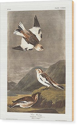 Snow Bunting Wood Print by John James Audubon