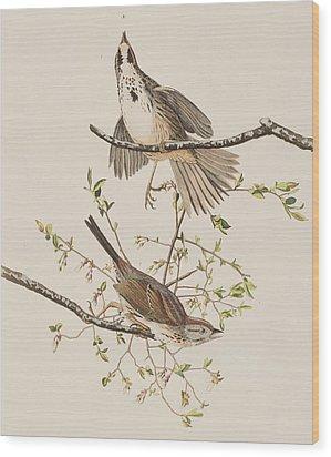 Song Sparrow Wood Print by John James Audubon