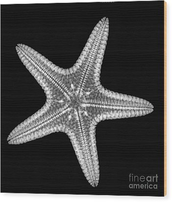 Starfish Wood Print by Ted Kinsman