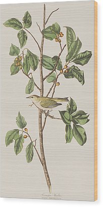 Tennessee Warbler Wood Print by John James Audubon