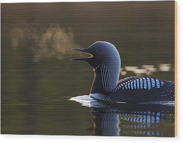 The Call Of The Loon Wood Print by Tim Grams