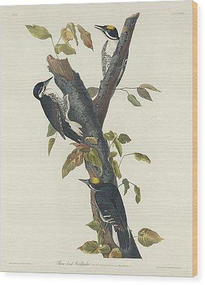 Three-toed Woodpecker Wood Print by John James Audubon