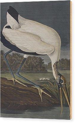 Wood Ibis Wood Print by John James Audubon