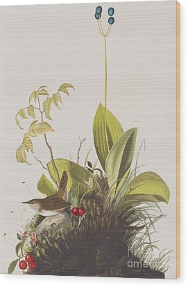 Wood Wren Wood Print by John James Audubon