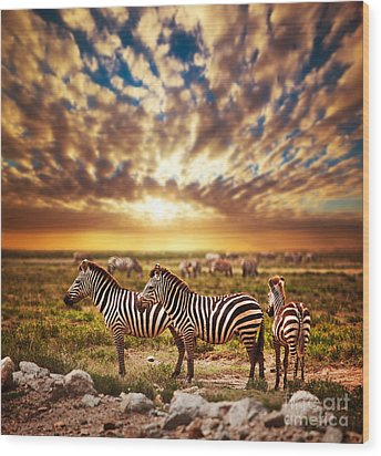 Zebras Herd On African Savanna At Sunset. Wood Print by Michal Bednarek