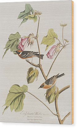 Bay Breasted Warbler Wood Print by John James Audubon