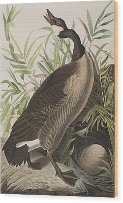 Canada Goose Wood Print by John James Audubon