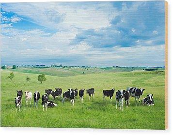 Happy Cows Wood Print by Todd Klassy