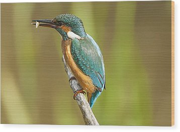Kingfisher Wood Print by Paul Neville