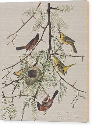 Orchard Oriole Wood Print by John James Audubon