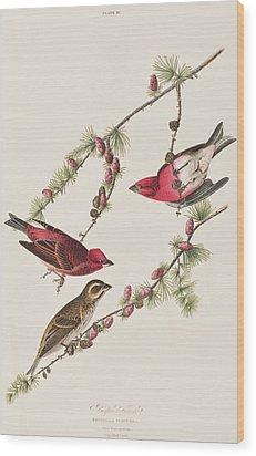 Purple Finch Wood Print by John James Audubon