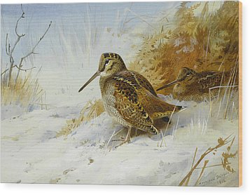 Winter Woodcock Wood Print by Archibald Thorburn