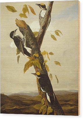 Woodpeckers Wood Print by John James Audubon