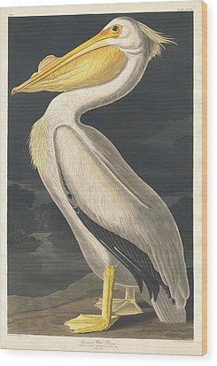 American White Pelican Wood Print by John James Audubon