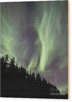 Aurora Borealis Over Trees, Yukon Wood Print by Jonathan Tucker