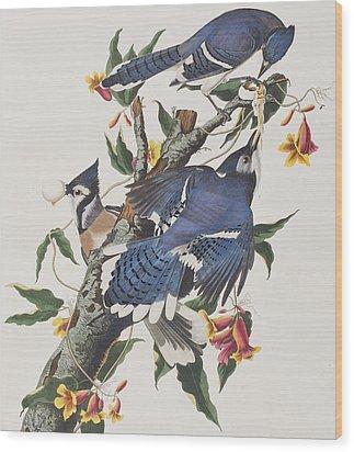 Blue Jay Wood Print by John James Audubon