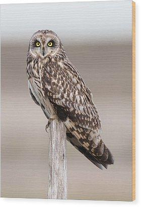 Short Eared Owl Wood Print by Ian Hufton