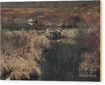 A Beaver's Work Wood Print by Skip Willits