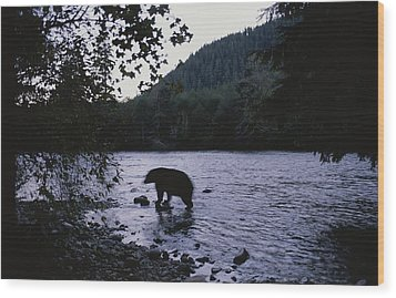 A Black Bear Searches For Sockeye Wood Print by Joel Sartore