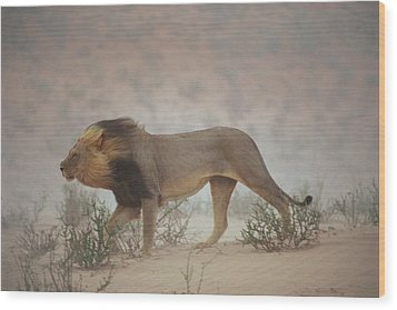 A Lion Pushes On Through A Gritty Wind Wood Print by Chris Johns