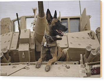 A Military Working Dog Sits On A U.s Wood Print by Stocktrek Images