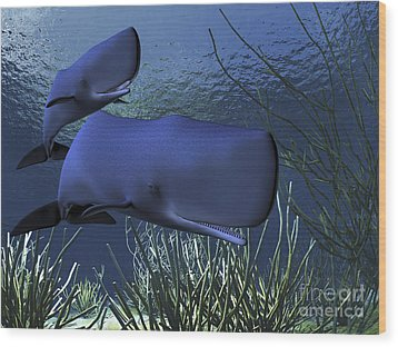 A Mother Sperm Whale Escorts Her Calf Wood Print by Corey Ford