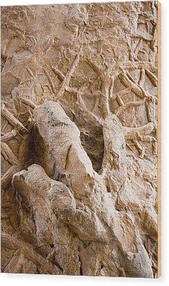 A Petrified Dinosaur Footprint Shown Wood Print by Taylor S. Kennedy