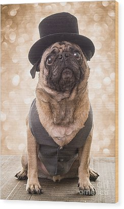 A Star Is Born - Dog Groom Wood Print by Edward Fielding