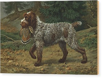 A Wire-haired Pointing Griffon Holds Wood Print by Walter A. Weber