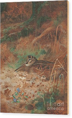 A Woodcock And Chick In Undergrowth Wood Print by Archibald Thorburn