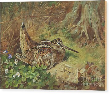 A Woodcock And Chicks Wood Print by Archibald Thorburn