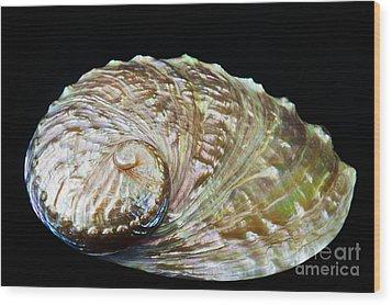 Abalone Shell Wood Print by Bill Brennan - Printscapes
