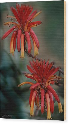 African Fire Lily Wood Print by Joseph G Holland