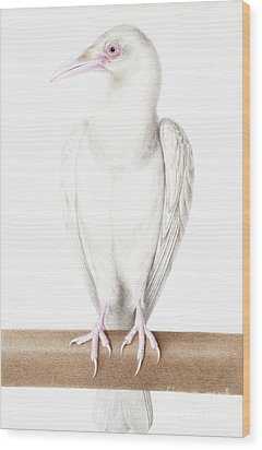 Albino Crow Wood Print by Nicolas Robert