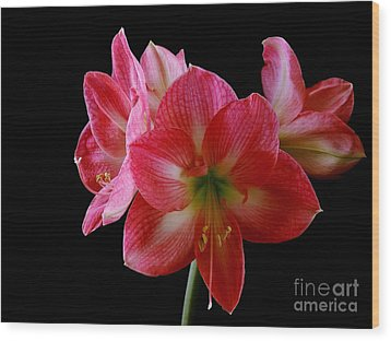 Amaryllis Wood Print by The Stone Age
