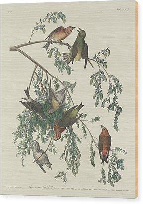 American Crossbill Wood Print by John James Audubon