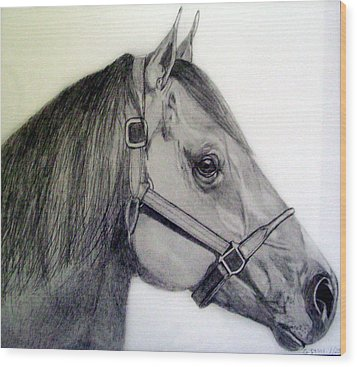 American Quarter Horse Wood Print by Gary Stull