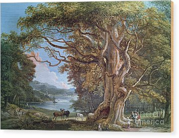 An Ancient Beech Tree Wood Print by Paul Sandby