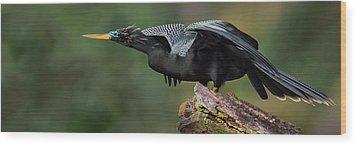 Anhinga Anhinga Anhinga, Costa Rica Wood Print by Panoramic Images
