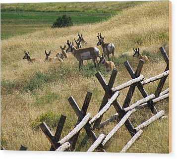 Antelope 2 Wood Print by Marty Koch