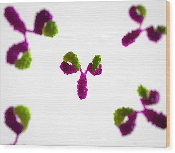 Antibodies, Artwork Wood Print by Sciepro