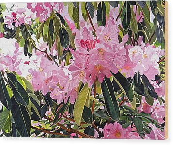 Arboretum Rhododendrons Wood Print by David Lloyd Glover