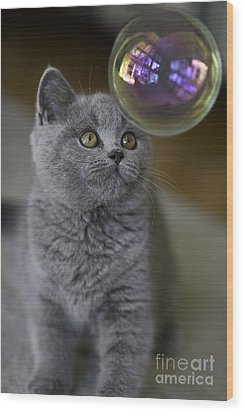 Archie With Bubble Wood Print by Avalon Fine Art Photography