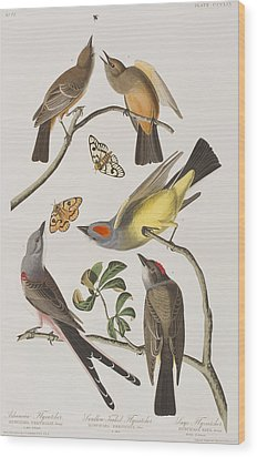 Arkansaw Flycatcher Swallow-tailed Flycatcher Says Flycatcher Wood Print by John James Audubon