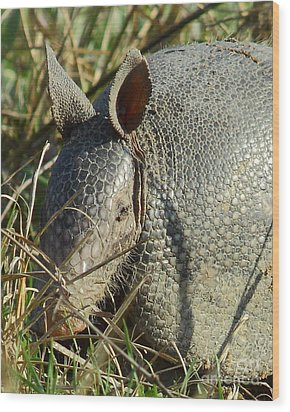 Armadillo By Morning Wood Print by Robert Frederick
