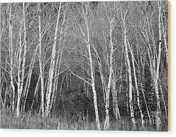 Aspen Forest Black And White Print Wood Print by James BO  Insogna